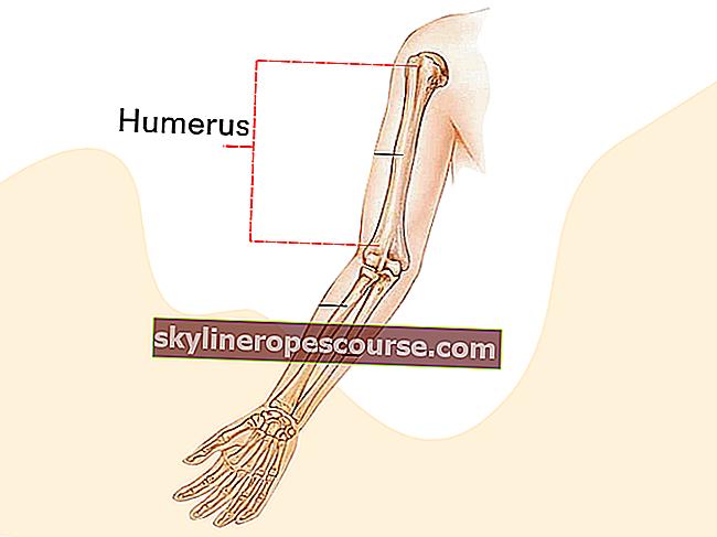 上骨機能(FULL)+その構造と描画