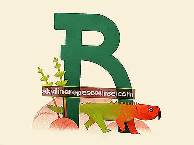 Reptile: Karakteristike, vrste i primjeri (mogu se održati)