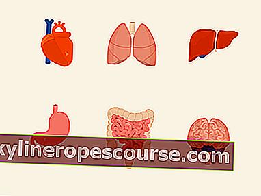 Жлъчни органи: структура, функция и болест + снимки