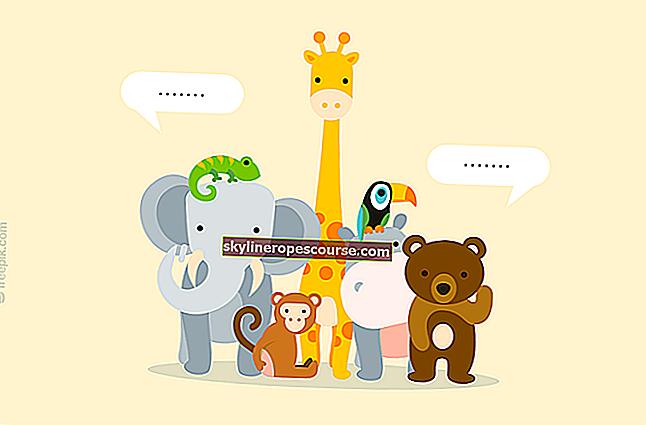 Haben Tiere wirklich Sprache?