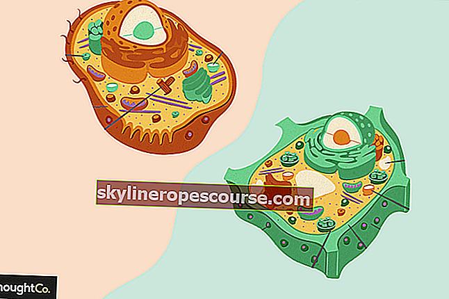 Verschil tussen dierlijke cellen en plantencellen (+ afbeeldingen en volledige uitleg)