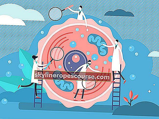 Verschil tussen mitose en meiose - celdeling