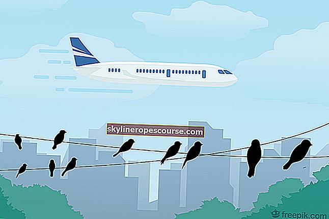 Как птиците вдъхновяват самолетите